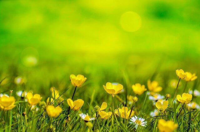 jak pozbyć się chwastów z trawnika