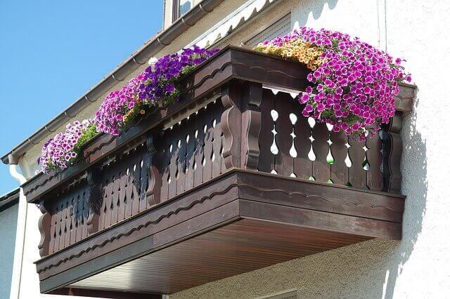 kwiaty balkonowe zwisające lubiące słońce