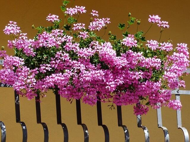 kwiaty na bardzo słoneczny balkon